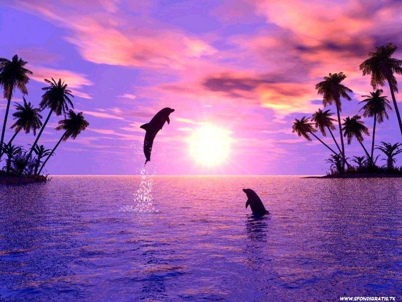Aqua dolphin hace que el coño se siente a la derecha 10